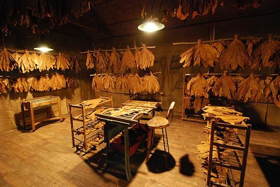 lavorazione tabacco